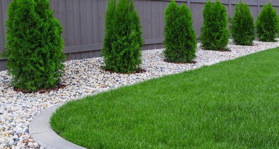Как правильно посадить газон на участке