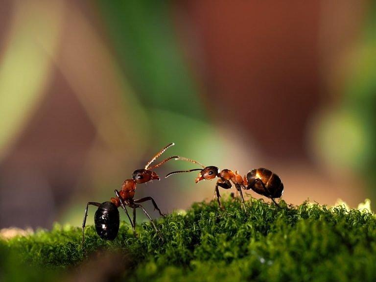 Борьба с муравьями в огороде