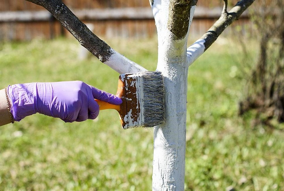 Как сохранить молодые и плодовые деревья