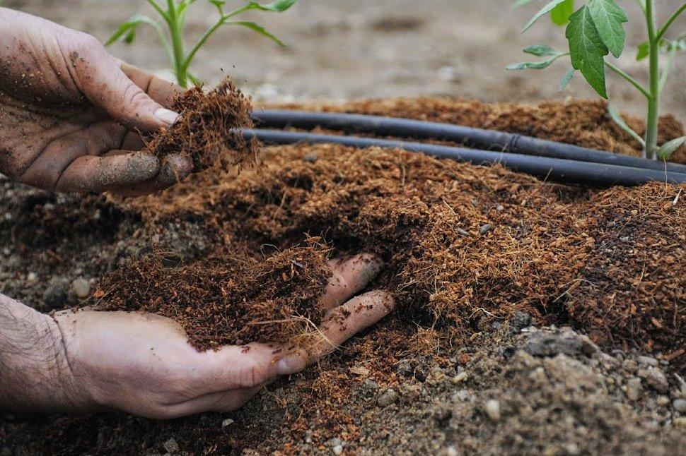 Подготовка земли к посадке томатов