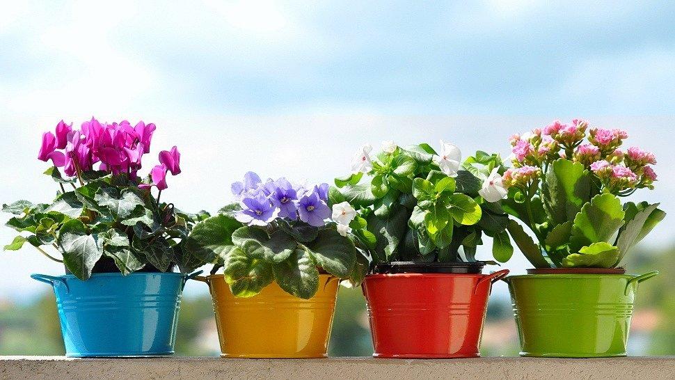 Комнатные цветы для украшения интерьера