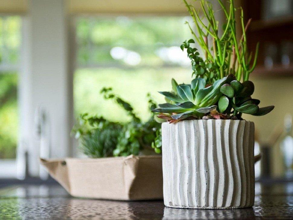 Как выбрать подходящее растение для квартиры