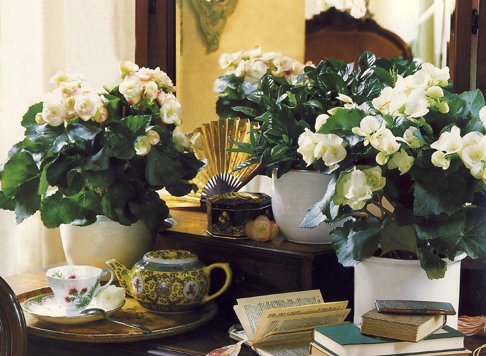 Как размещать комнатные цветы в интерьере