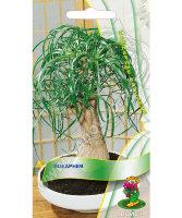 Семена бокарнея купить по низким ценам в Москве с доставкой в интернет-магазине Садовый Мир